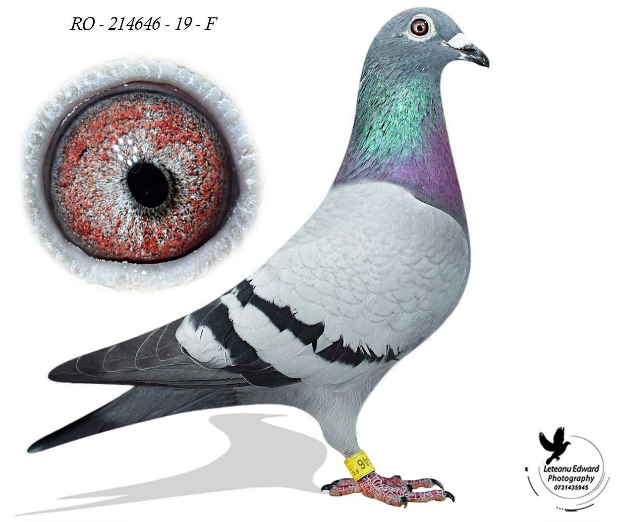 RO 19-214646