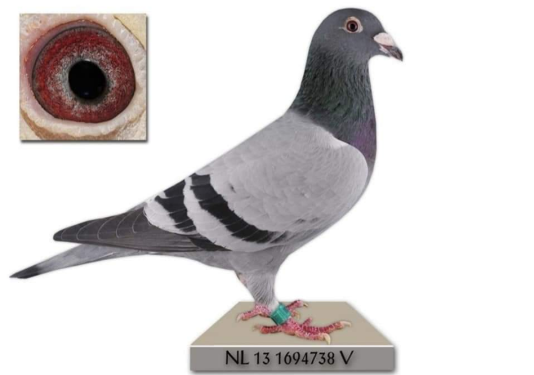 NL 13-1694738