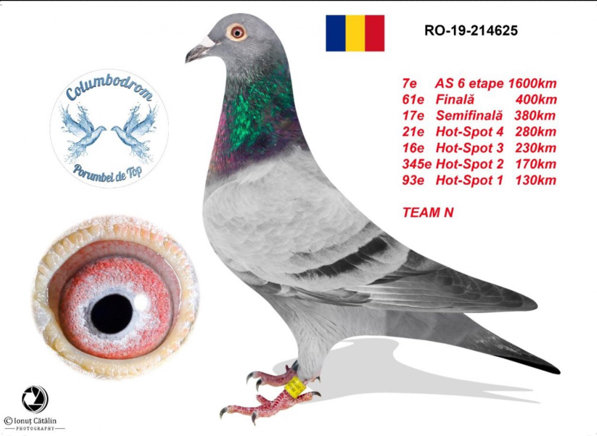 RO 20-486753