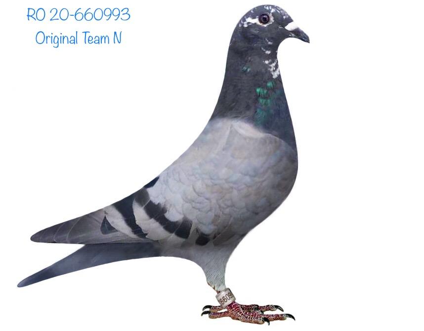 RO 20-660993