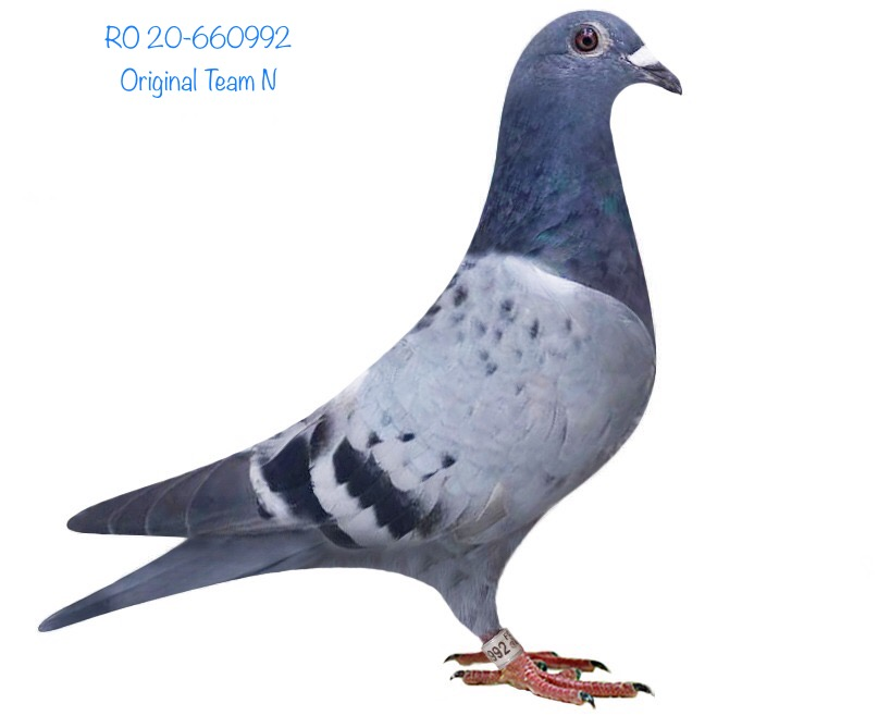 RO 20-660992