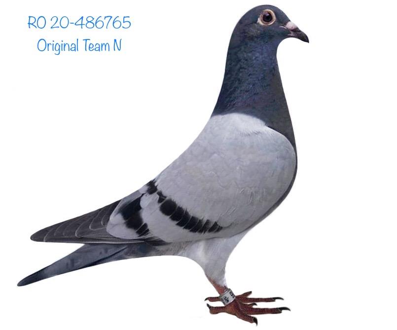 RO 20-486765