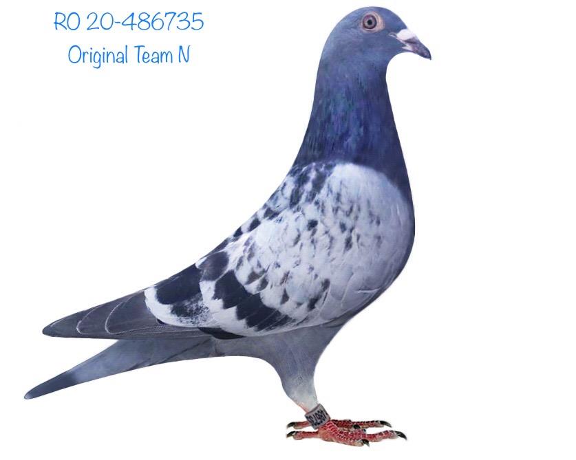 RO 20-486735