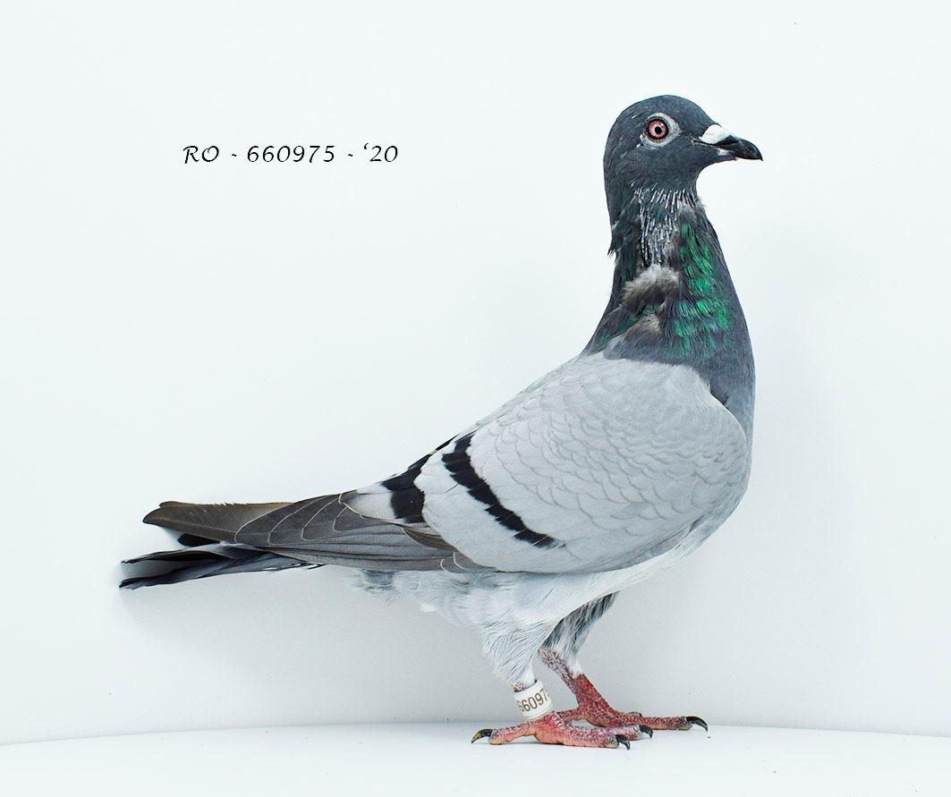 RO 20-660975