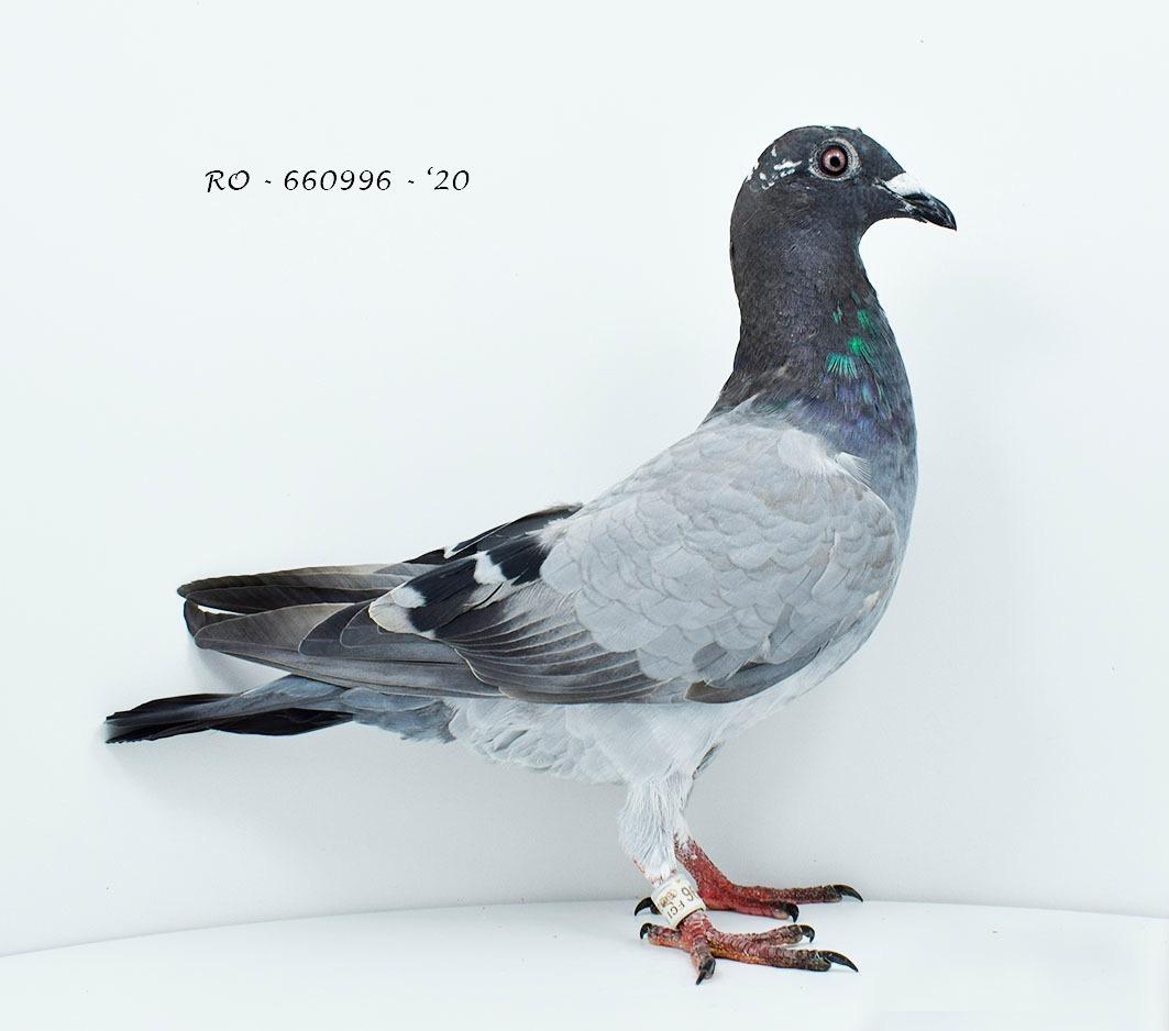 RO 20-660996