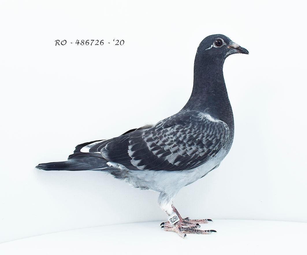 RO 20-486726