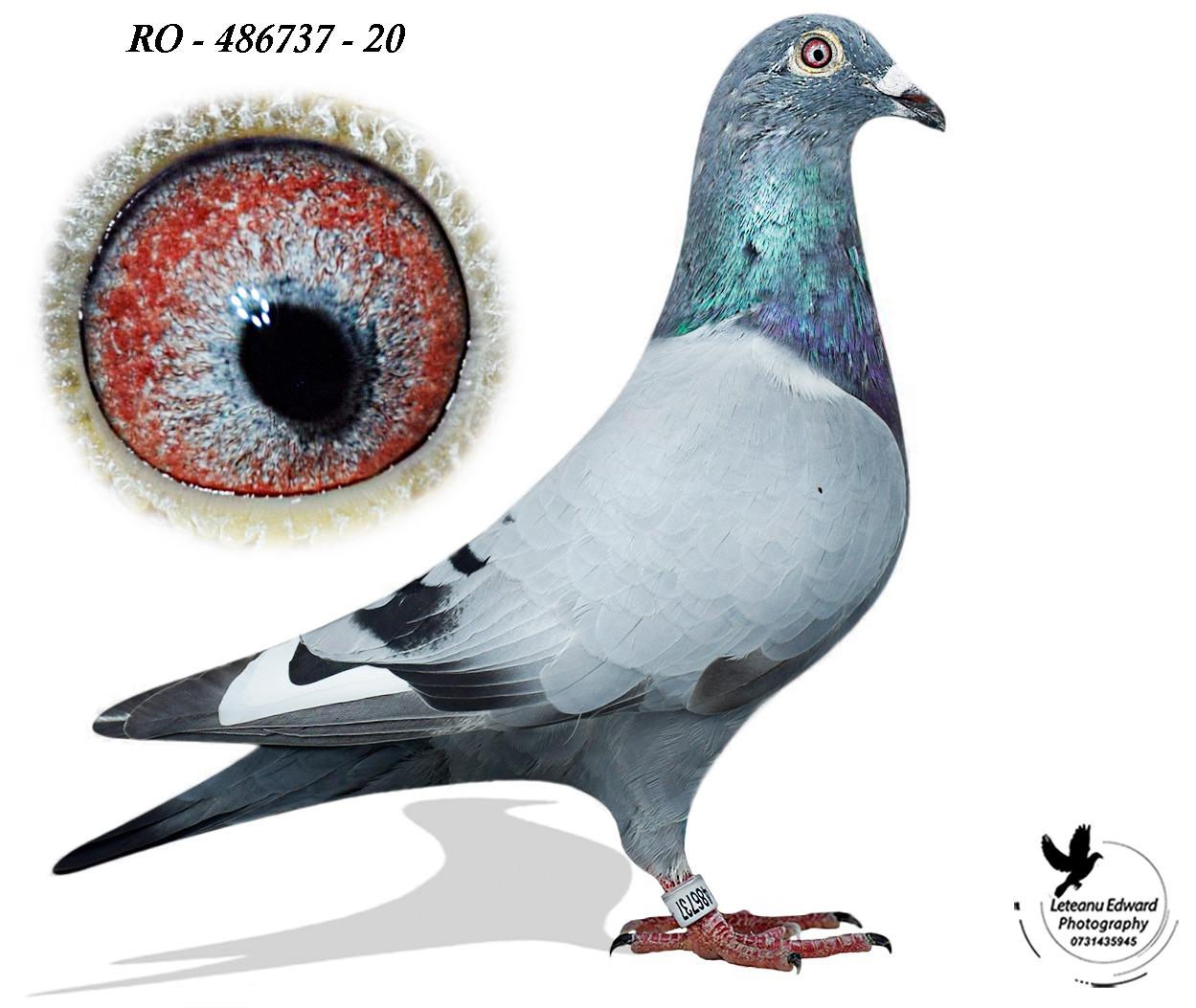 RO 20-486737